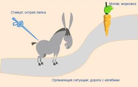 подгоняет осла
